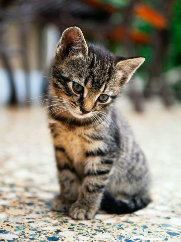 If we don't have the kitten of your dreams, we will find it for you!