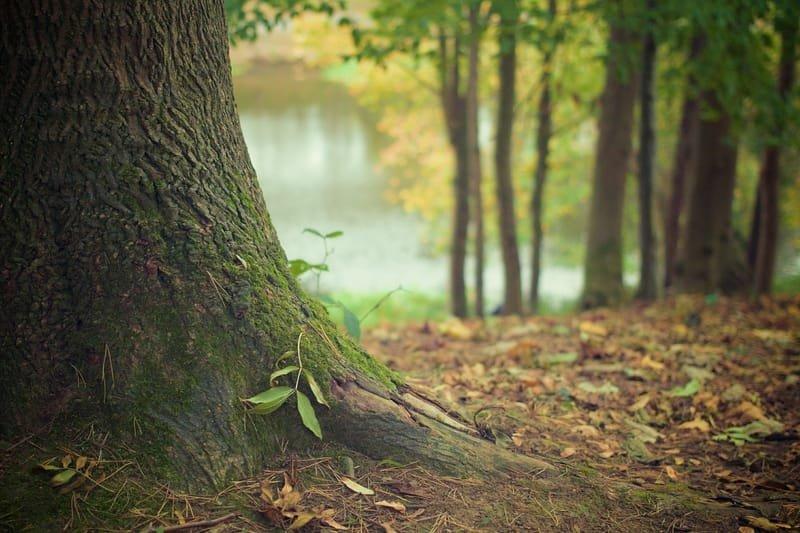 אתרים בנושא נטיעת עצים