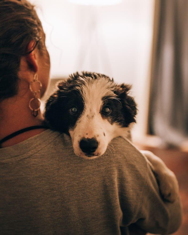 הדרכה למטפלים בעזרת בעלי חיים