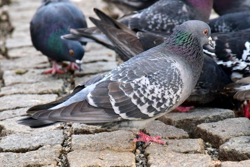 Bird Blocking