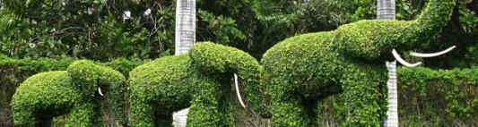 TOPIARY SCULPTURES AND LIVING WALLS