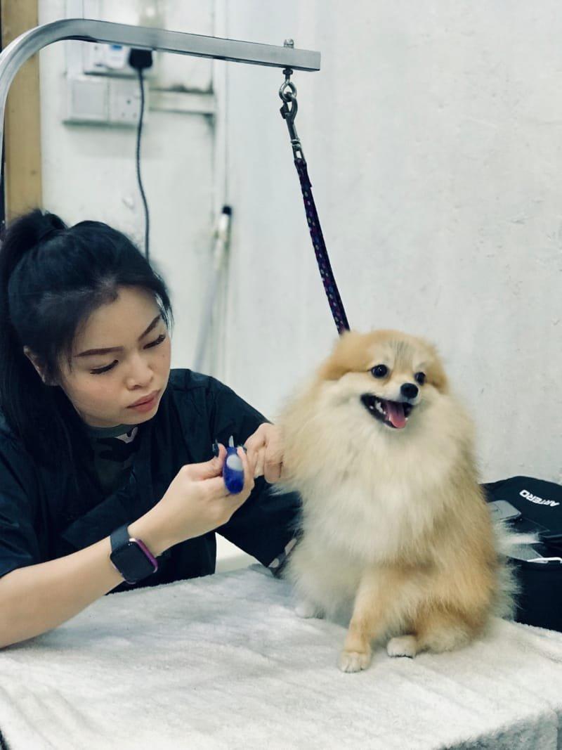 Canine Assistant Groomer Program