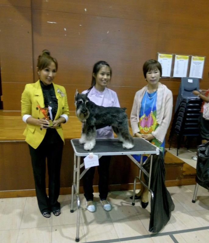 SKC GROOMING COMPETITION 2011