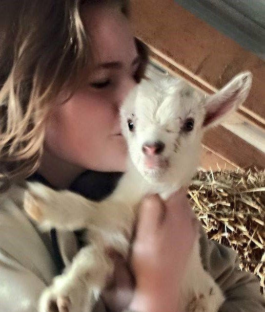 Baby Goat Play Time
