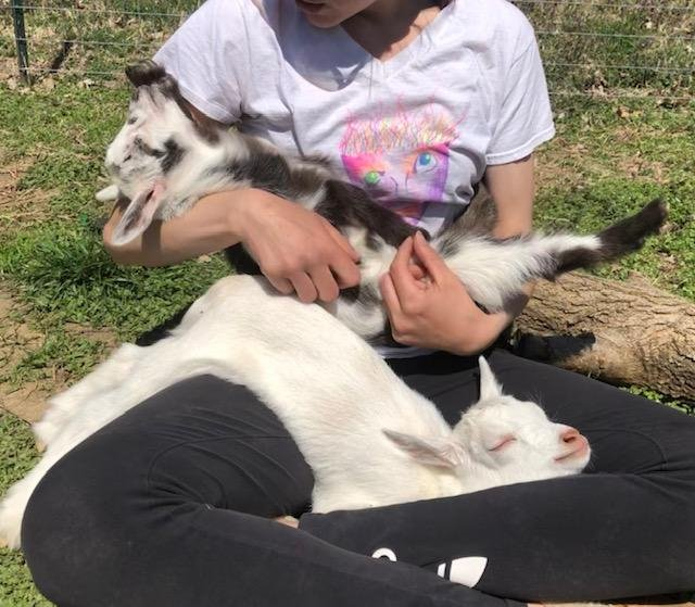 Animal Assisted Therapy Goats