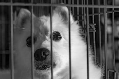 dogcrateguide