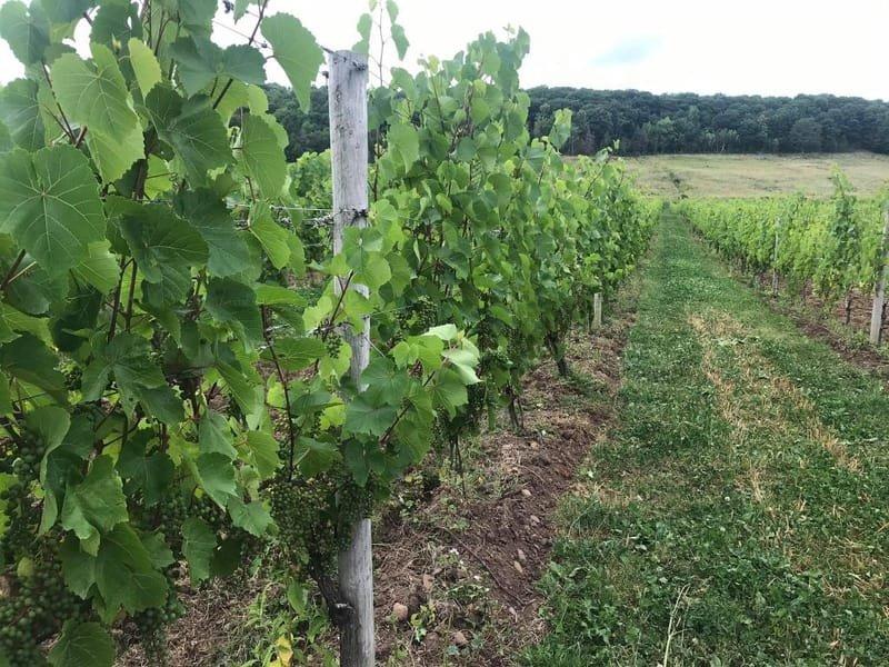 Vineyards & View Park - Virtual Video Tour