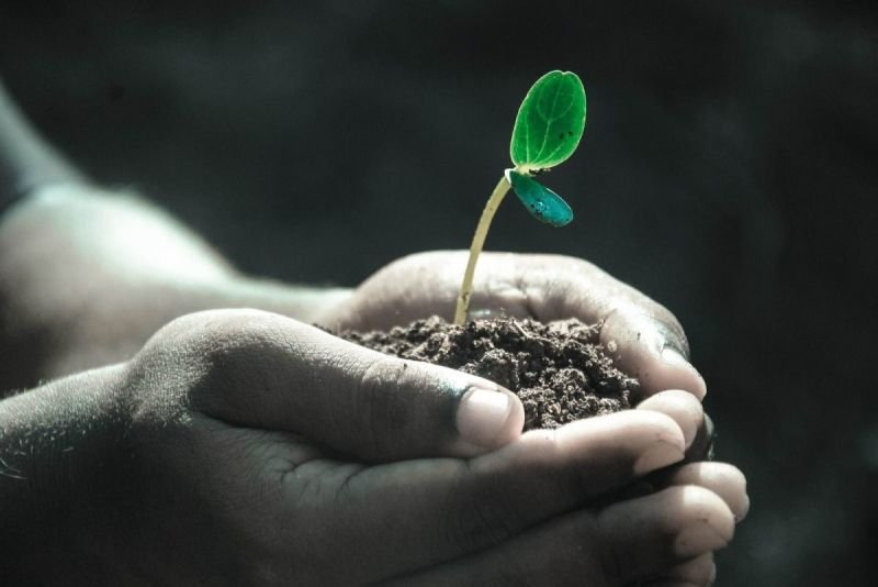 SUMMER AT KEW! What Makes Plants grow?