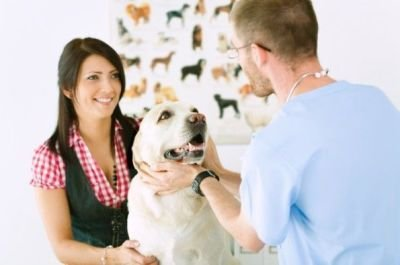 Tips on Choosing an Animal Hospital