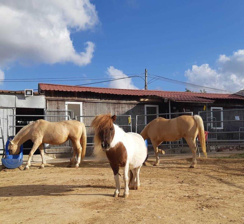 סדנא לצמיחה וללמידה בעבודה עם סוסים (הסדנא משלבת כלים ממודל ה- EAGALA)