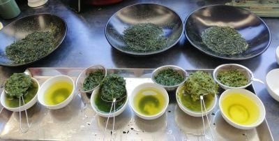 Tea Leaves Inspection and Brewing Workshops