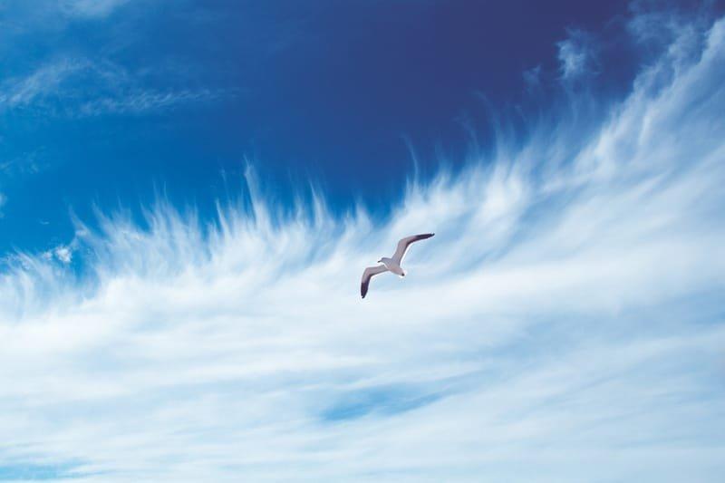 """גמ""""ח לפרוס כנפיים"""