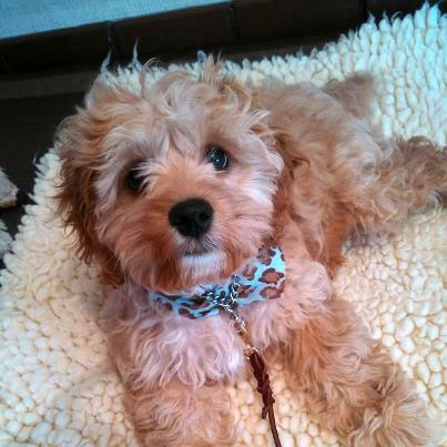 Puppy Updates