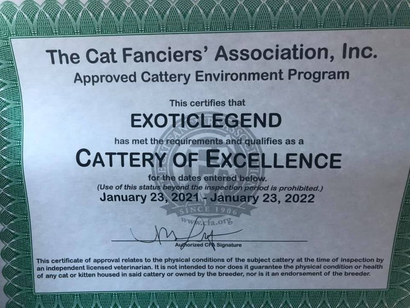 2021 - 2022 Cattery of Excellence