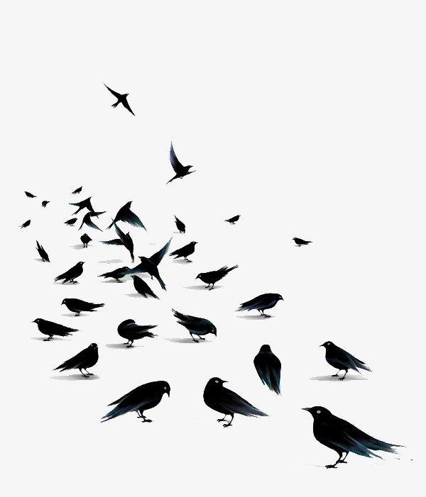مكافحة الحمام والطيور الغير مرغوبة