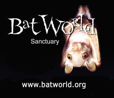 Bat World MidCities