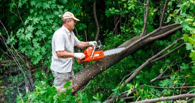 Kinds Of Tree Removal Services